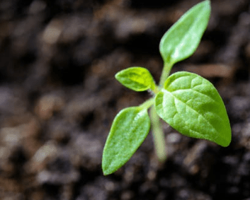Planting seeds for the future