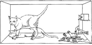 Schroedinger's Cat: Both Alive and Dead?