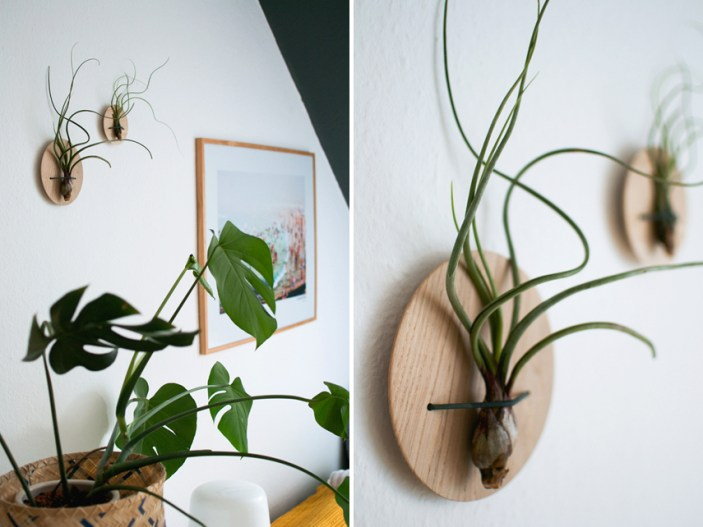 urban-jungle-bloggers-etairnity-airplants-2