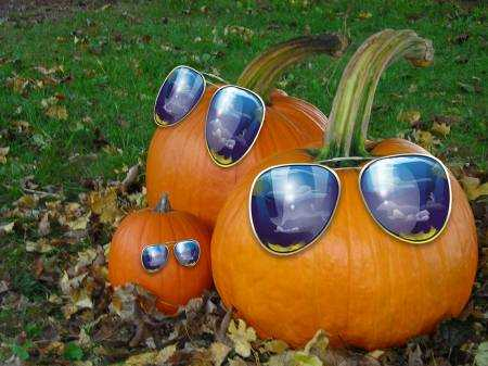 Fall Themed Wallpaper 20 Most Funny Pumpkin Pictures