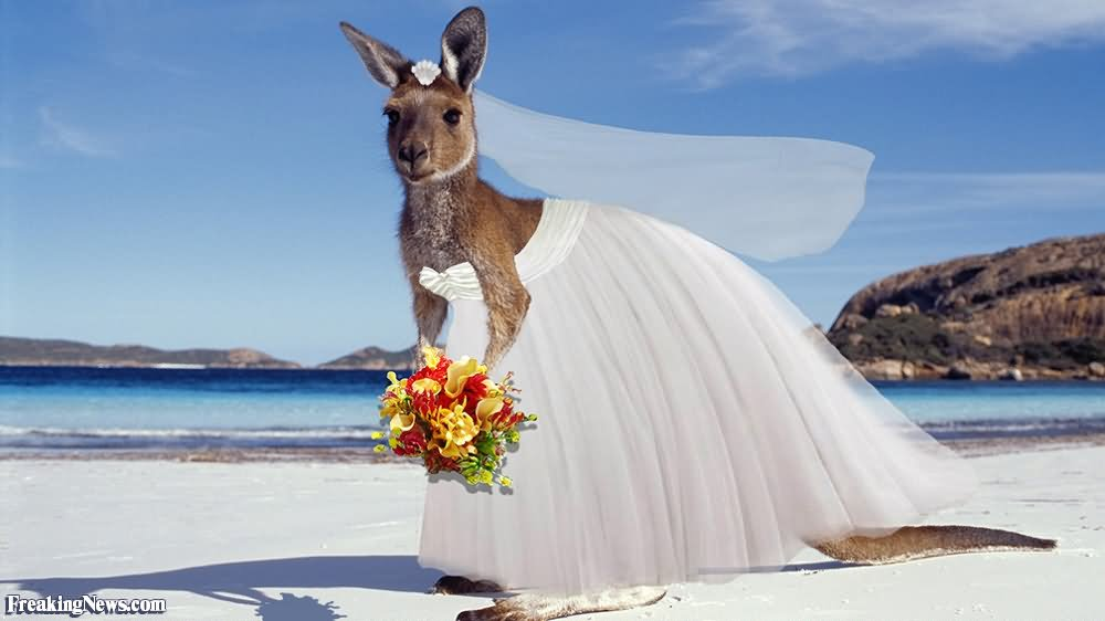 20 Most Funniest Kangaroo Face Pictures That Will Make You