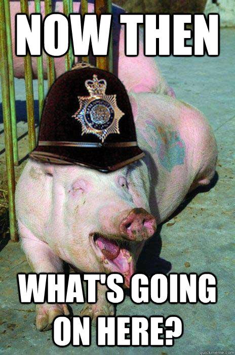 Funny Pigs  Askideascom