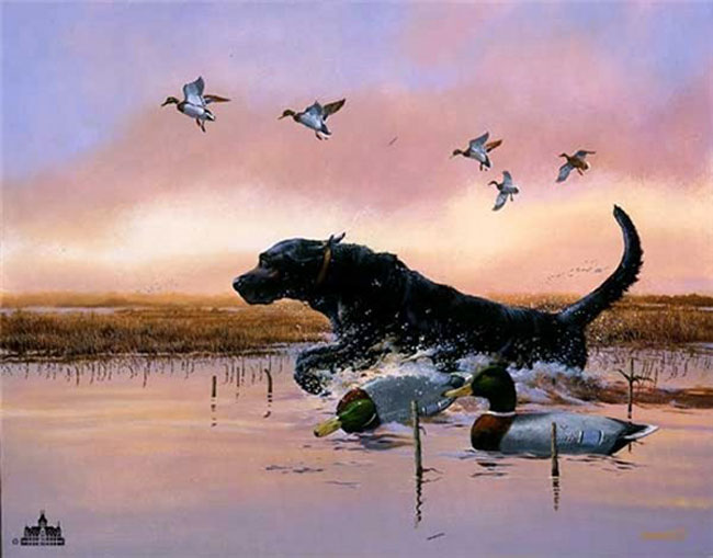 Cute Black Labs Wallpaper 30 Wonderful Black Labrador Retriever