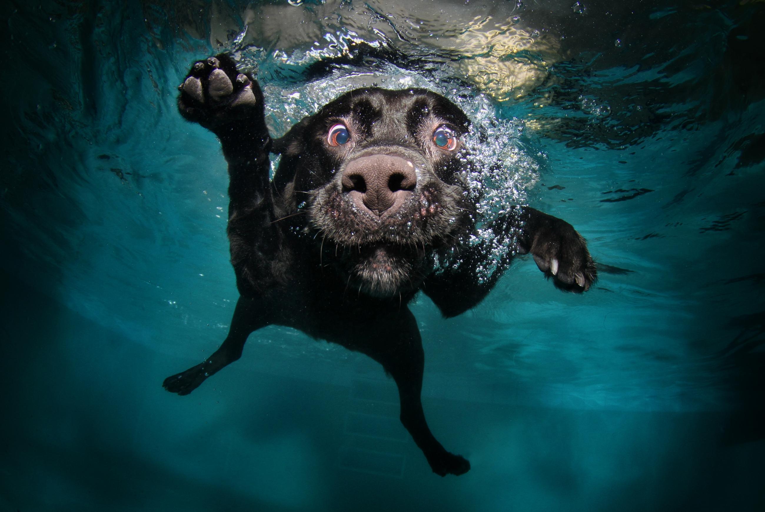 Puppies And Fall Wallpaper 30 Wonderful Black Labrador Retriever
