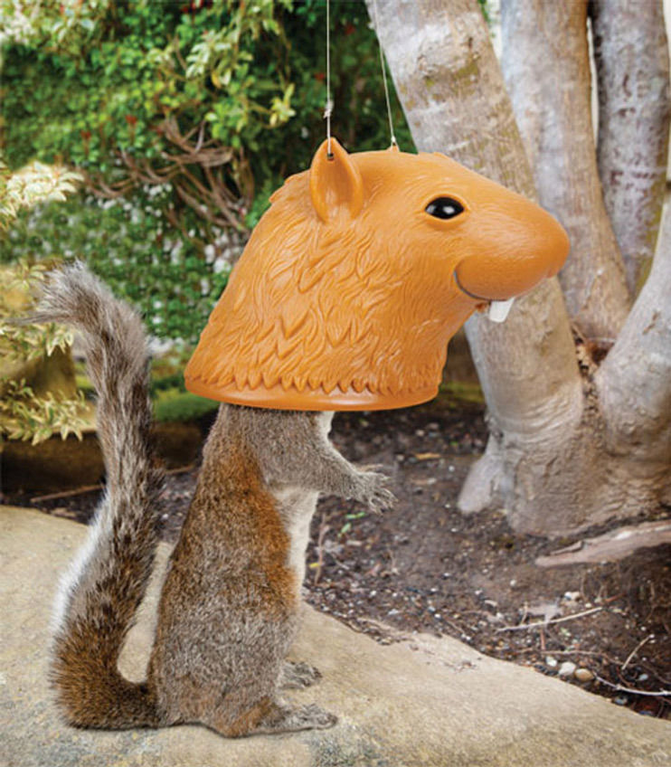 squirrel feeder chair foldable aluminum sports 31 most funny images and pictures