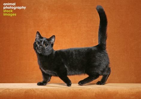 love your home corner sofa italsofa recliner 20 most beautiful black munchkin cat pictures