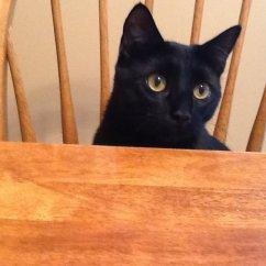 Black And Red Corner Sofa Latest Teak Wood Set Designs 46 Burmese Cat Pictures Photos