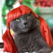 funny cat with red hair