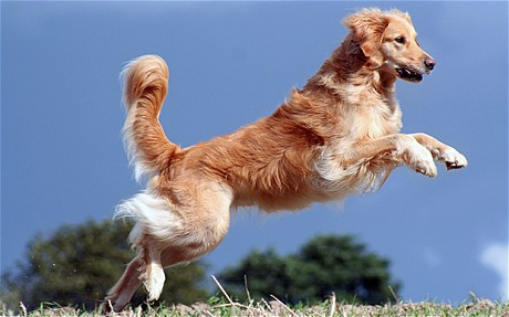 Cute Love Wallpaper For Whatsapp 15 Most Beautiful Golden Retriever Dog Pictures And Images