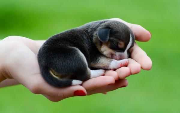 Awesome Beagle Dog