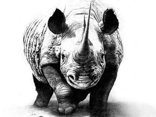25 wonderful rhino tattoos