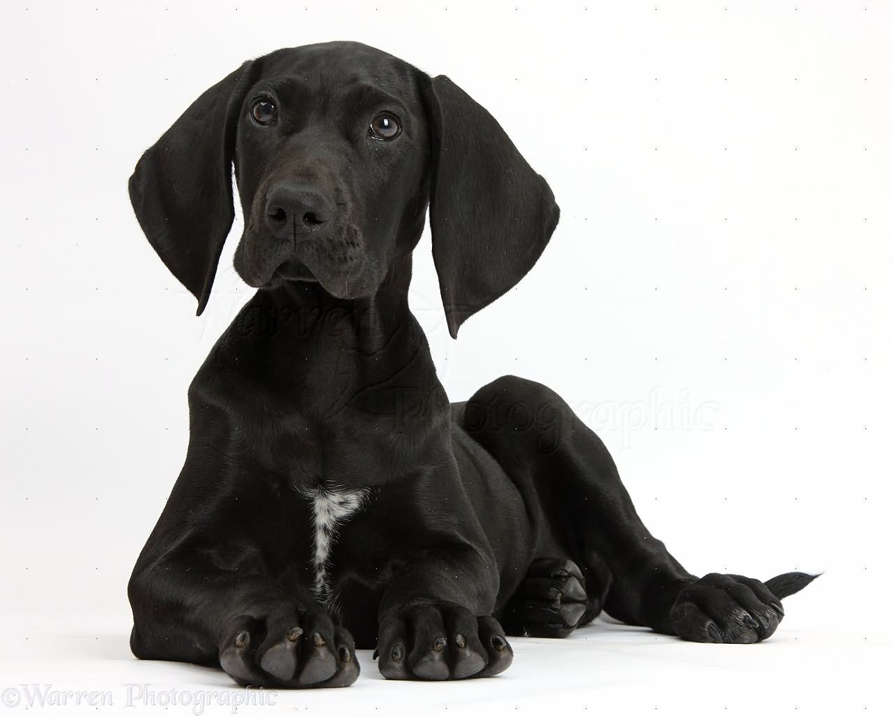 Girl Sitting In Garden Wallpaper 40 Most Adorable Black Pointer Dog Pictures And Photos