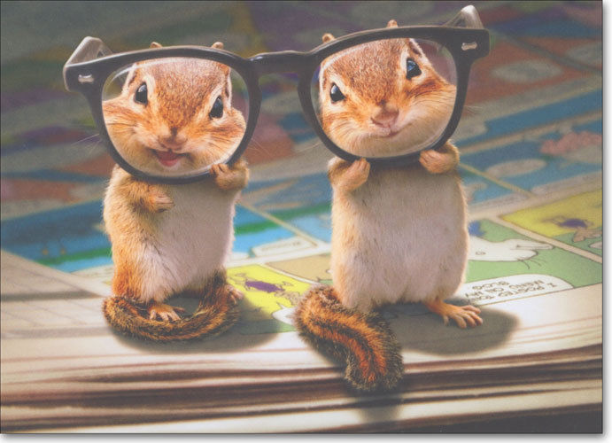 50 Most Funniest Chipmunk Pictures And Photo