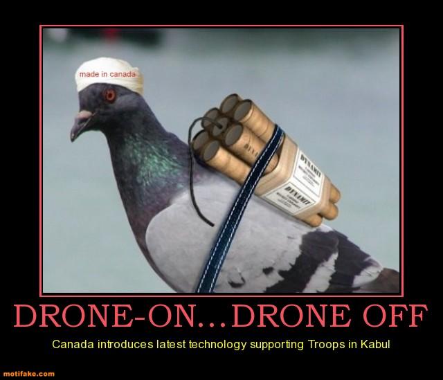 Funny Pigeon Terrorist Picture