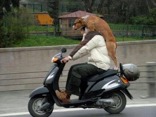 Bear Riding Motorcycle