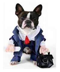 Dog In Businessman Suit Funny Costume Image