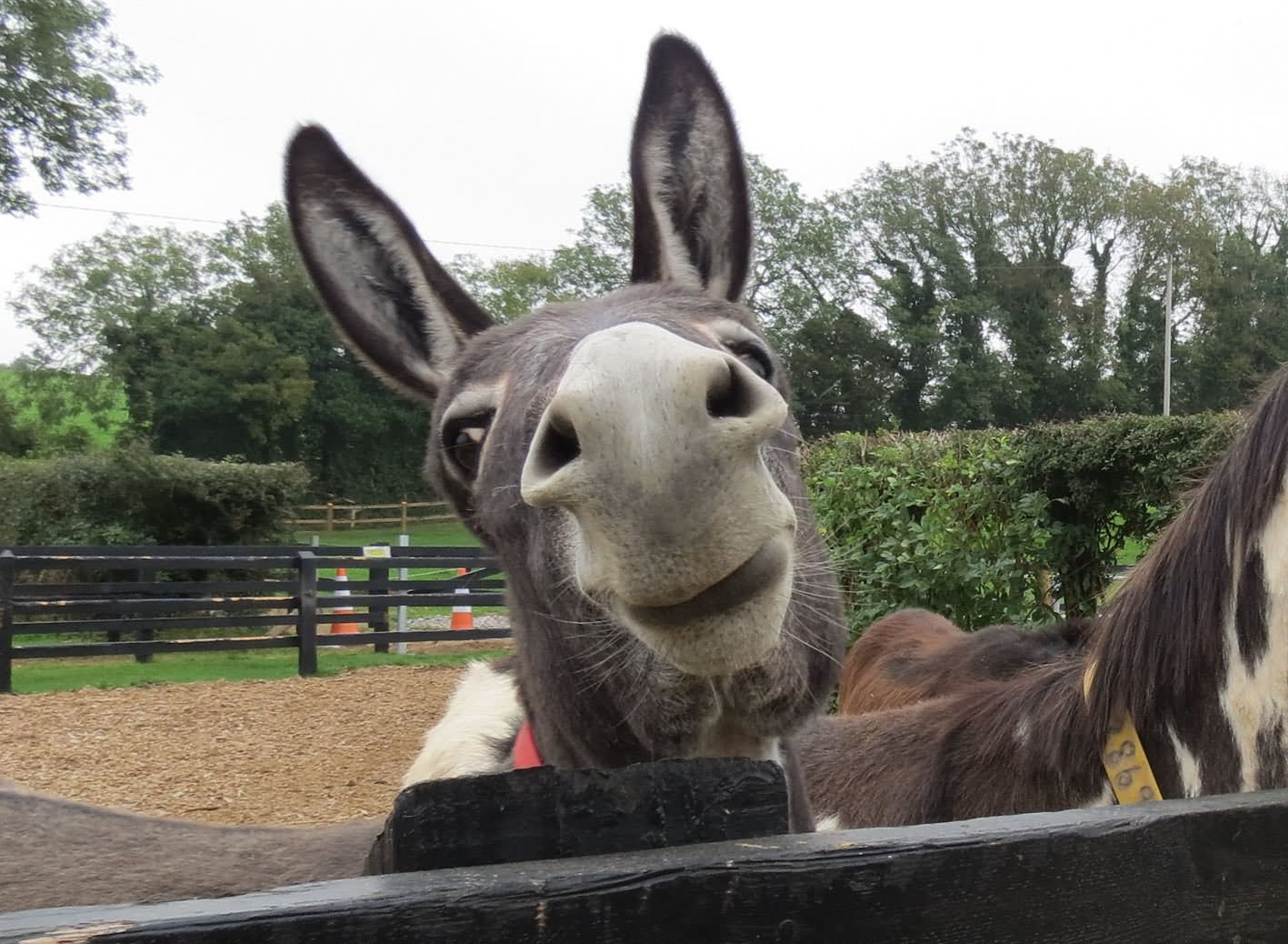 Very Cute Couple Wallpaper 15 Most Funny Donkey Face Pictures That Will Make You Laugh