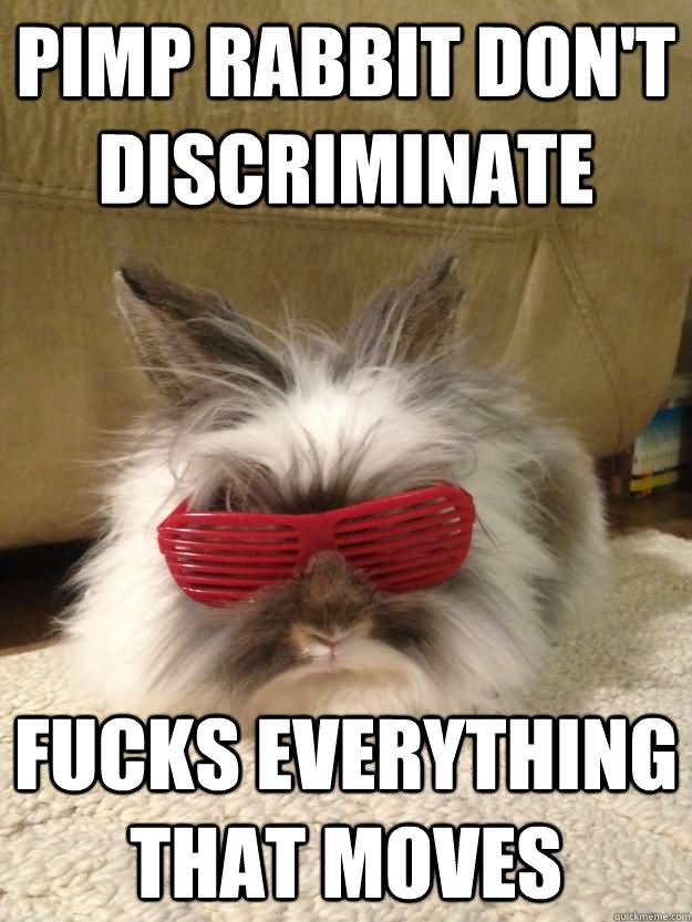 20 Very Funny Rabbit Meme Photos And Pictures