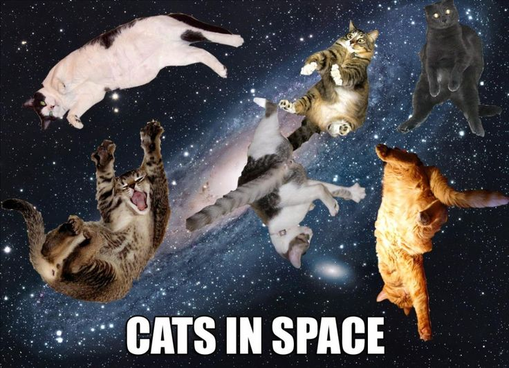 Wallpaper Sushi Cute 31 Funny Space Meme Pictures You May Have Never Seen Before