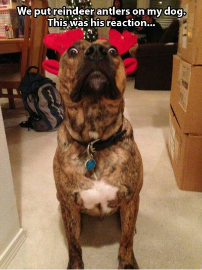 15 Very Funny Reindeer Meme Pictures And Photos