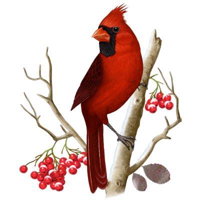 flying cardinal tattoo design