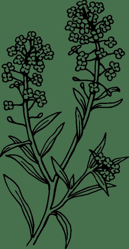 22+ Plant Tattoo Designs