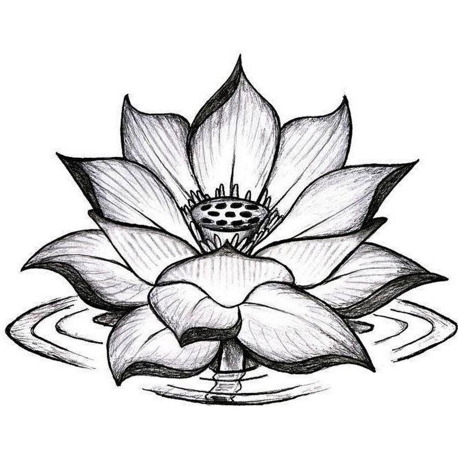 Lotus Flower Tattoo Outlines Kayaflowerco