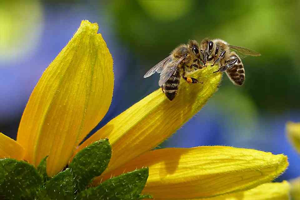 "Critical Analysis of ""The Bee Meeting"" 