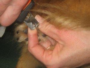 toe-nail-clipping-2