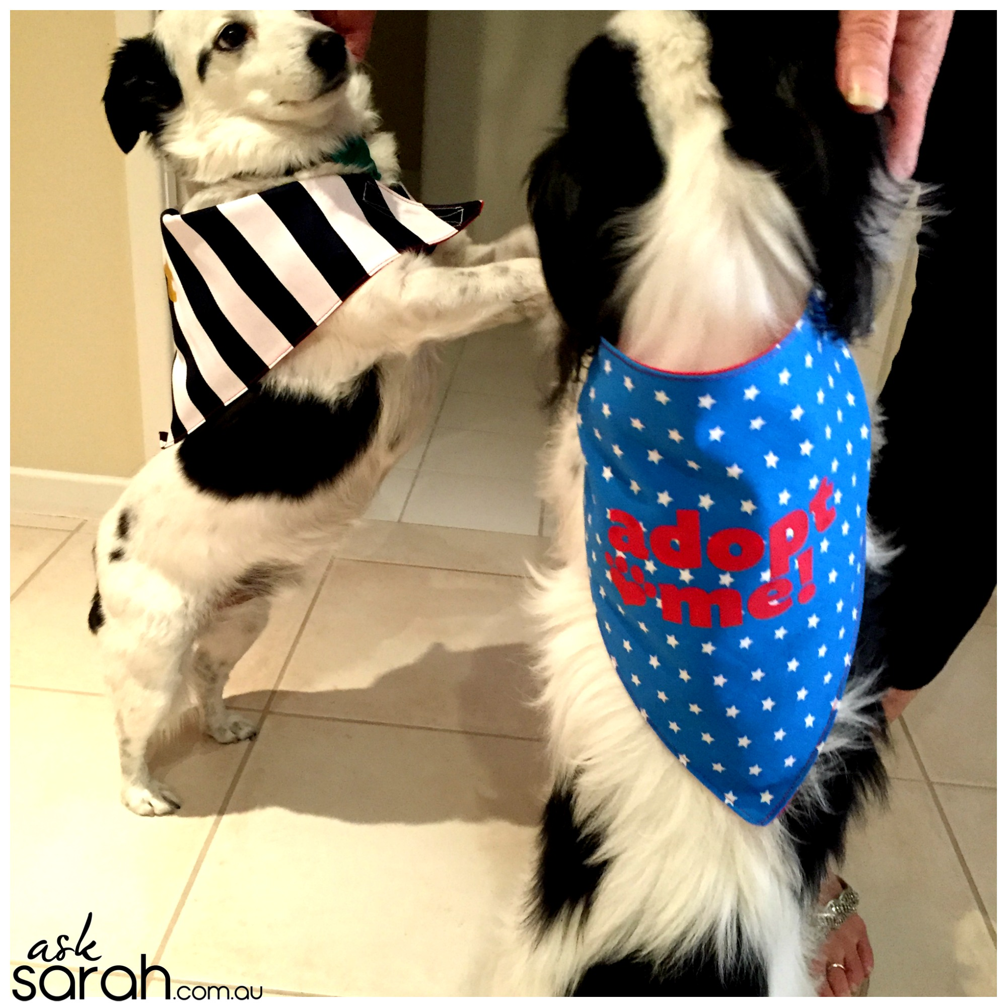 Sew: Reversible 'Adopt Me' Dog Bandana Tutorial {Great For Charity Sewing or Just For Your Dog}