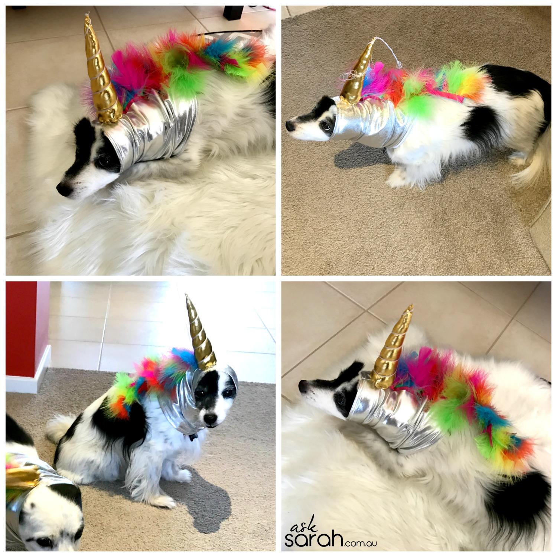 Halloween: Unicorn Horn Dog Costume {DIY Metallic & Rainbow Unicorn Snood Tutorial}
