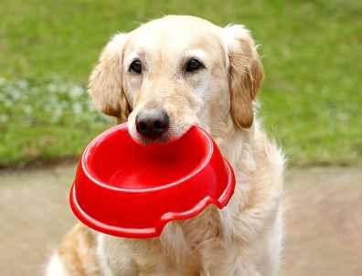 Image result for begging dog
