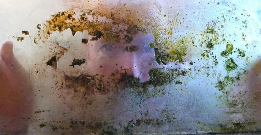 Ask Wet  Forget Discover 4 Ways Wet  Forget Indoor Conquers Disgusting Black Mold  Ask Wet