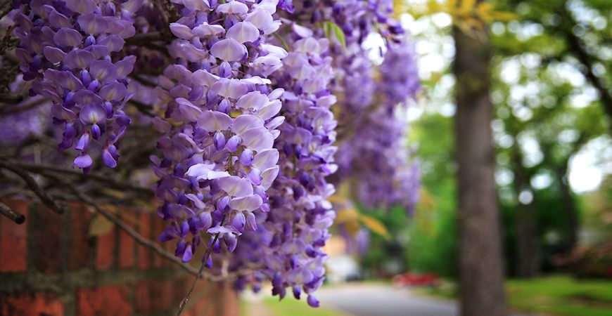 Ask Wet Amp Forget Our 7 Favorite Climbing Plants To Wow