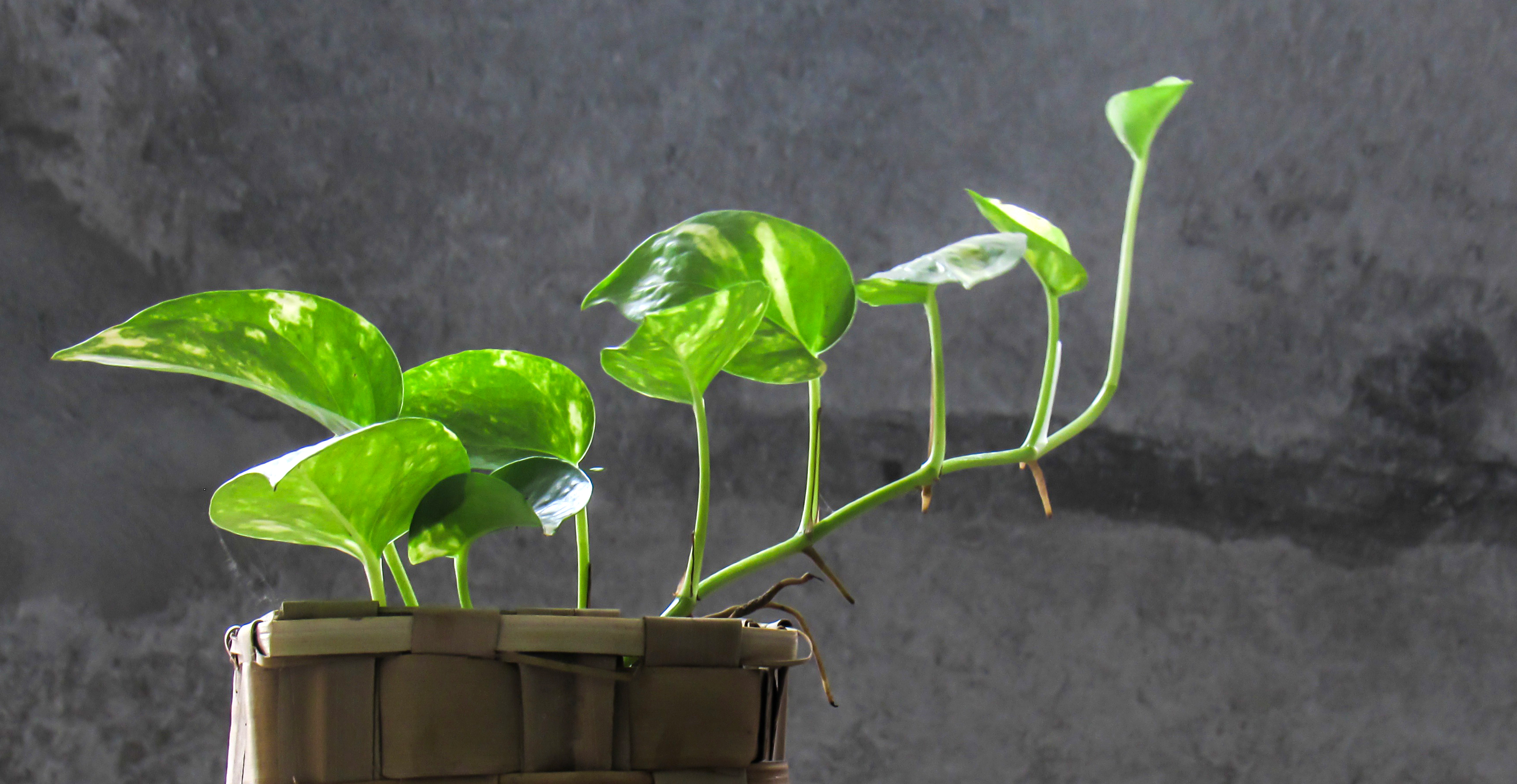 Ask Wet  Forget How to Solve the Most Common Houseplant