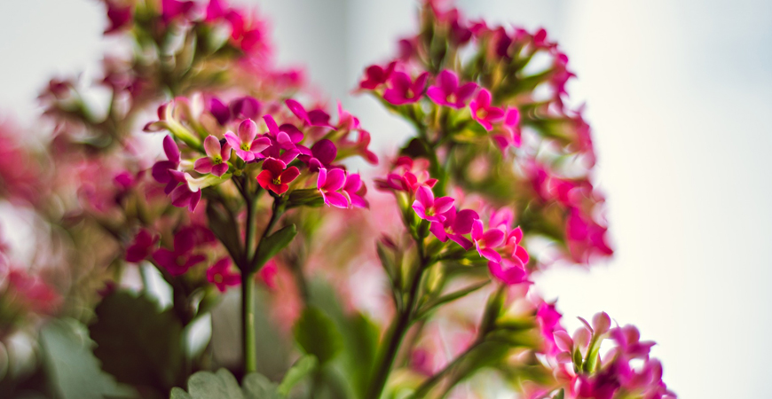 Ask Wet Forget The Best Indoor Flowering Plants To Brighten Up Your Home Ask Wet Forget