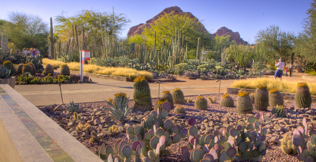 Image result for desert botanical garden phoenix