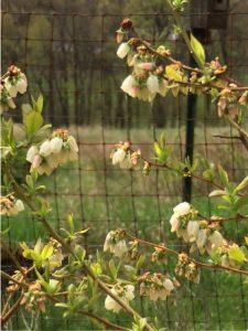 Spring 1 | Sally Paradysz