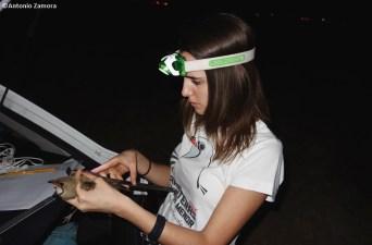 Anillamiento- Realizando mediciones del ala