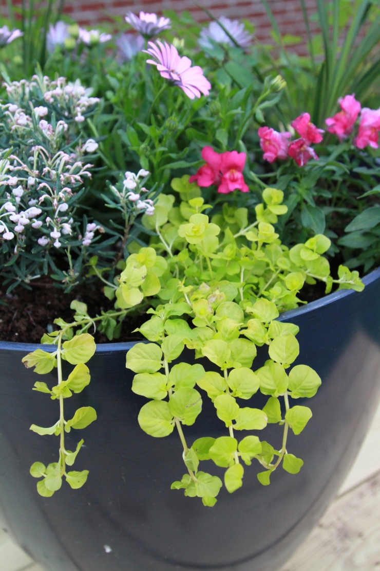 How To Choose Plants For Patio Pots