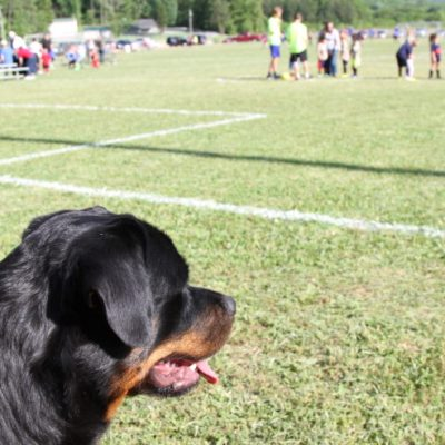 Is It Important to Socialize Your Puppy?: How To Socialize Your Dog #SentinelSpectrum