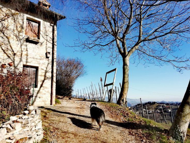 Borgo Colmellere