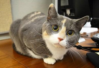 Cat Nutrition Tips Aspca