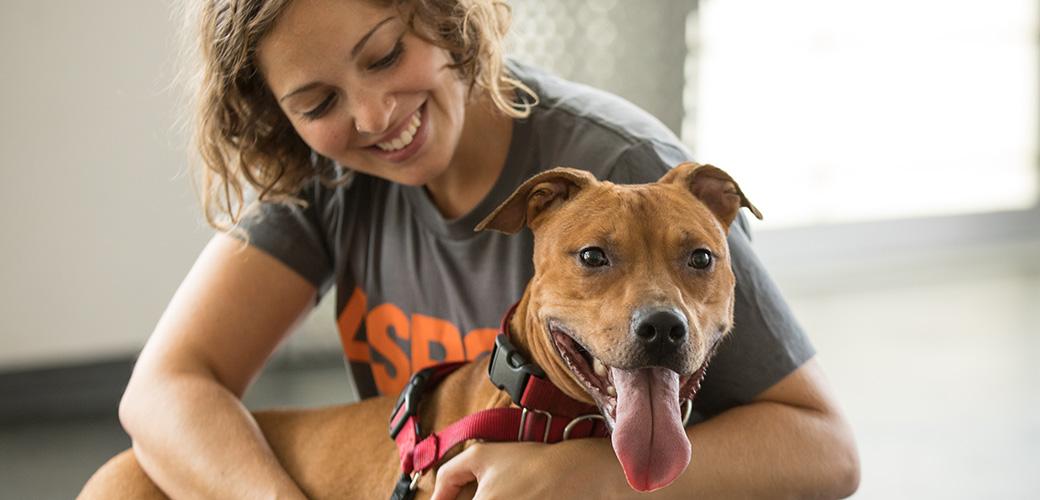 Adoption Tips l How to Adopt l Adopt a Pet l ASPCA