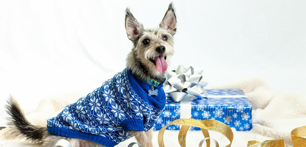 Holiday Safety Tips ASPCA