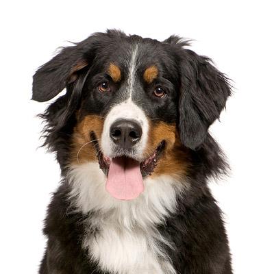 ASPCA Pet Insurance Member Center Amp Pet Health Care Community