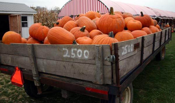 750+ FREE Pumpkin Carving Patterns & Stencils for Halloween Fun