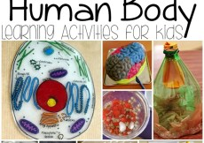 Human Body Learning Activities for Kids