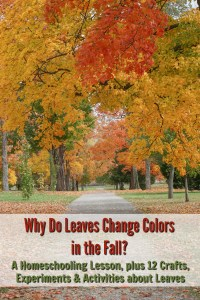 Why Do Leaves Change Colors in the Fall? A Homeschooling Lesson, plus 12 Crafts, Experiments & Activities about Leaves