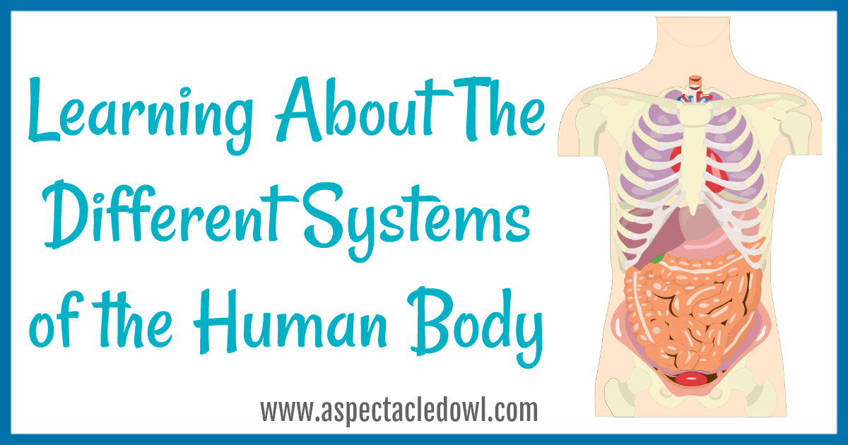 Learning About The Different Systems of the Human Body